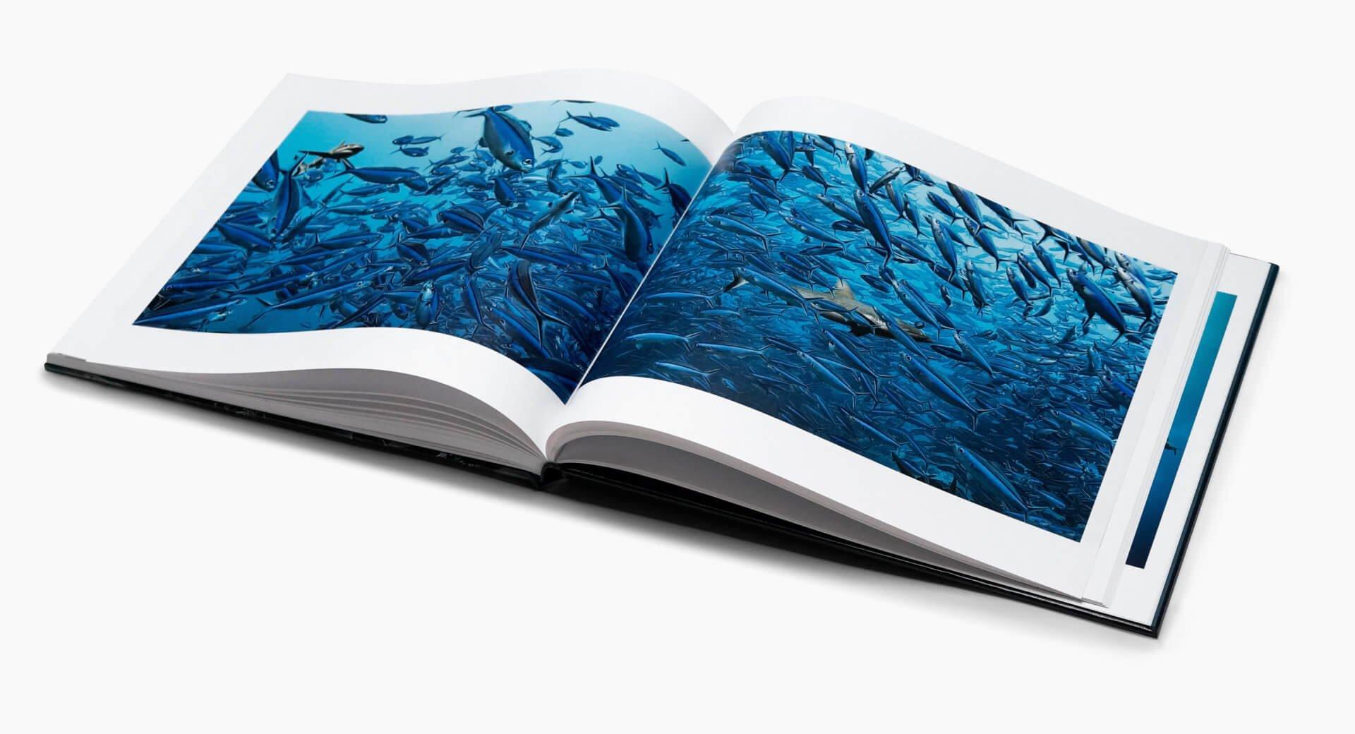 Livre making-off 700 requins dans la nuit