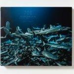Couverture de 700 requins dans la nuit