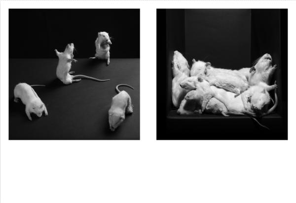 2054-rats-2