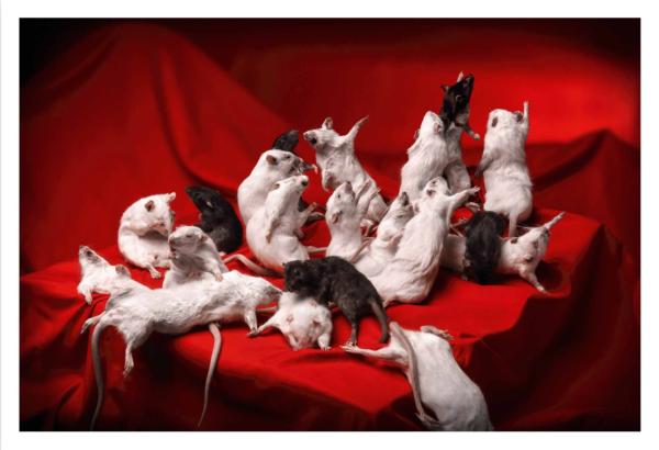 2054-rats-3
