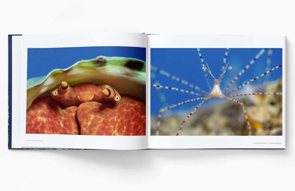 Livre_Ballesta_Planete_Mediterranee_Interieur-3