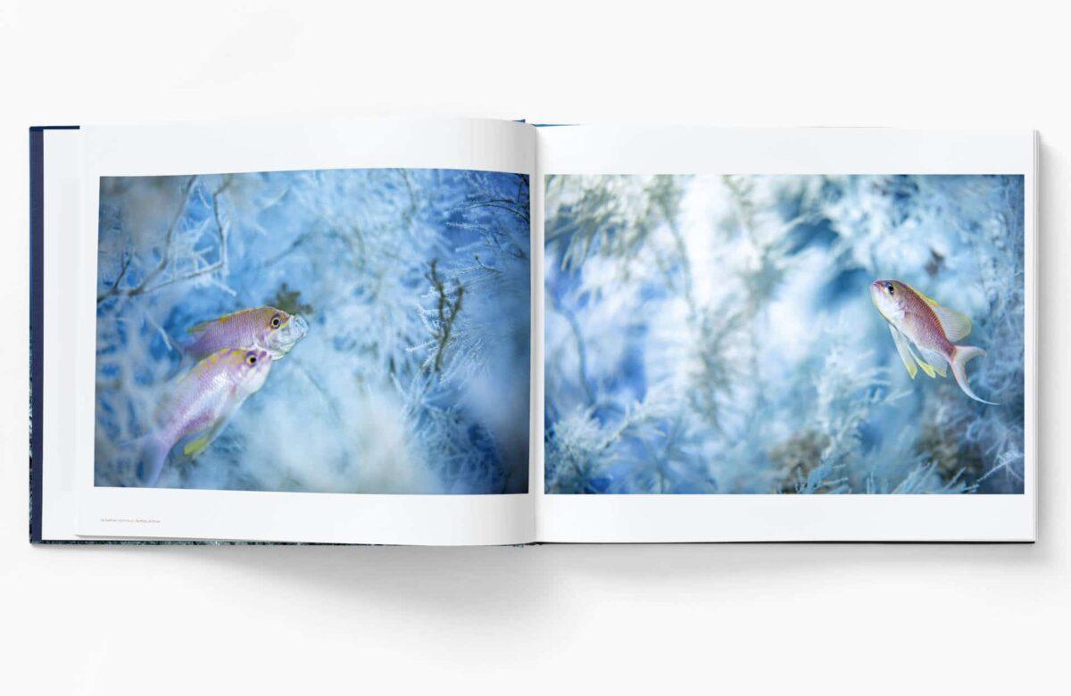 Book_Ballesta_Planete_Mediterranee_Inside-4