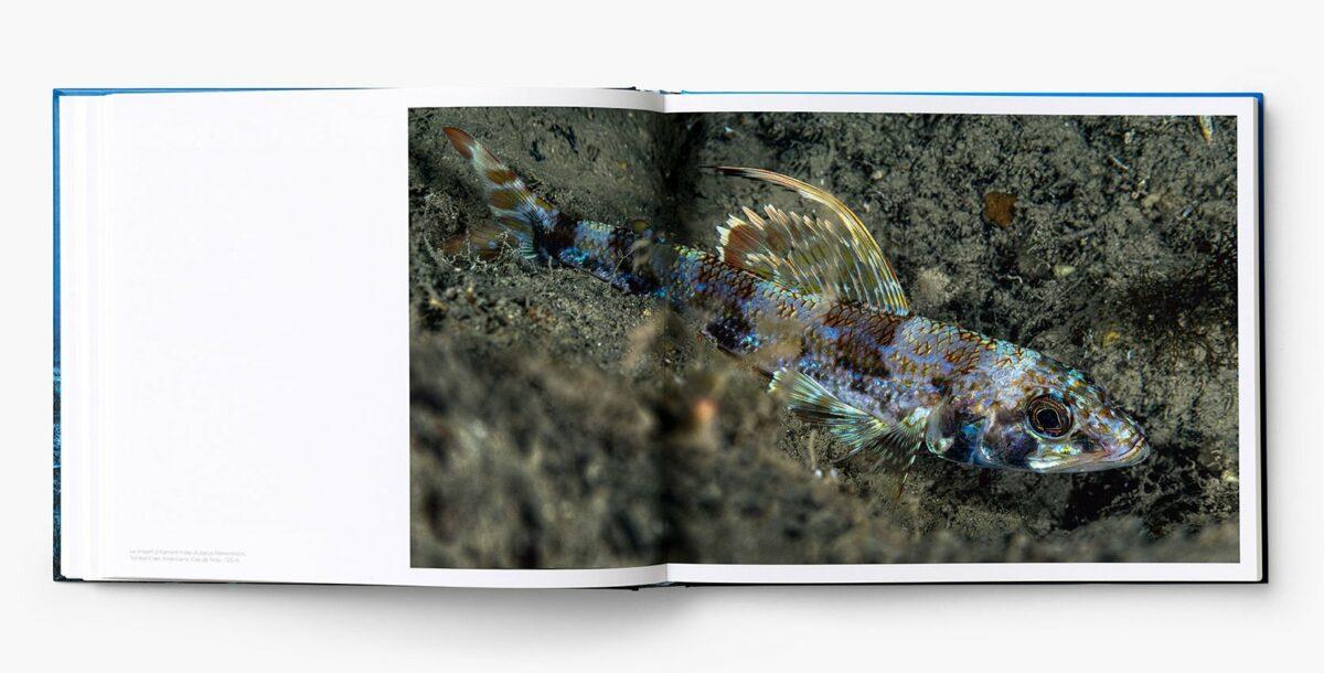 Livre_Planete_Mediterranee_interieur15