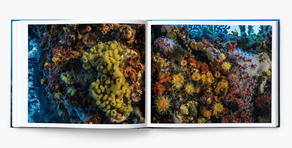 Livre_Planete_Mediterranee_interieur17