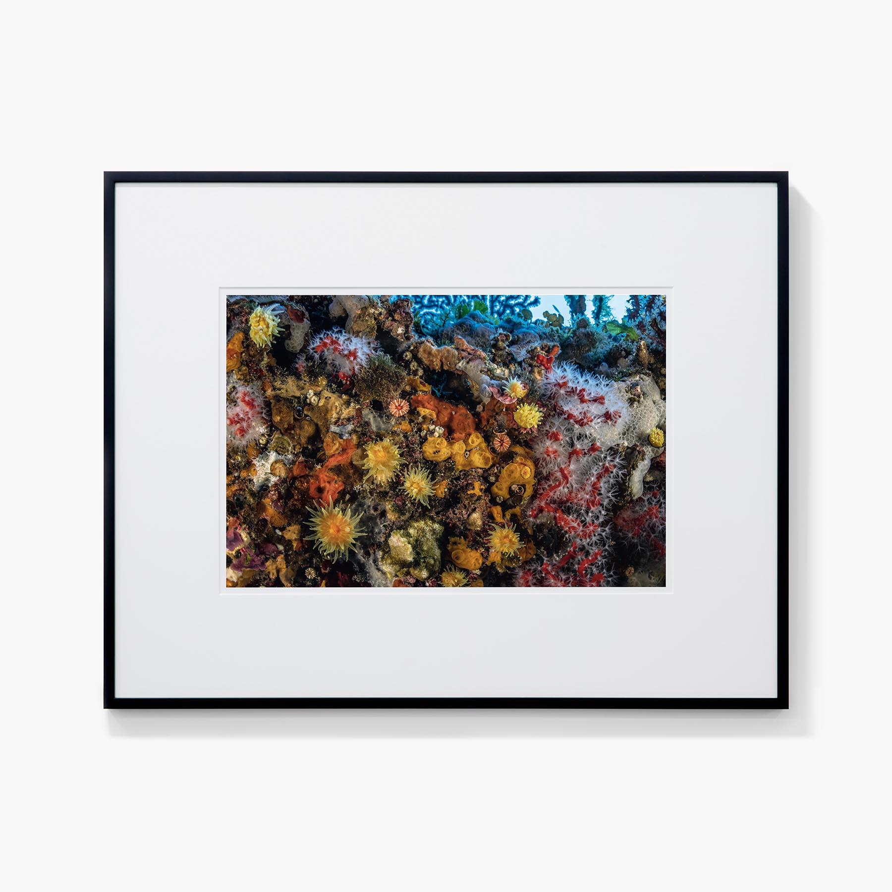 Tirage Laurent Ballesta Assemblage d'invertébrés sur coralligène