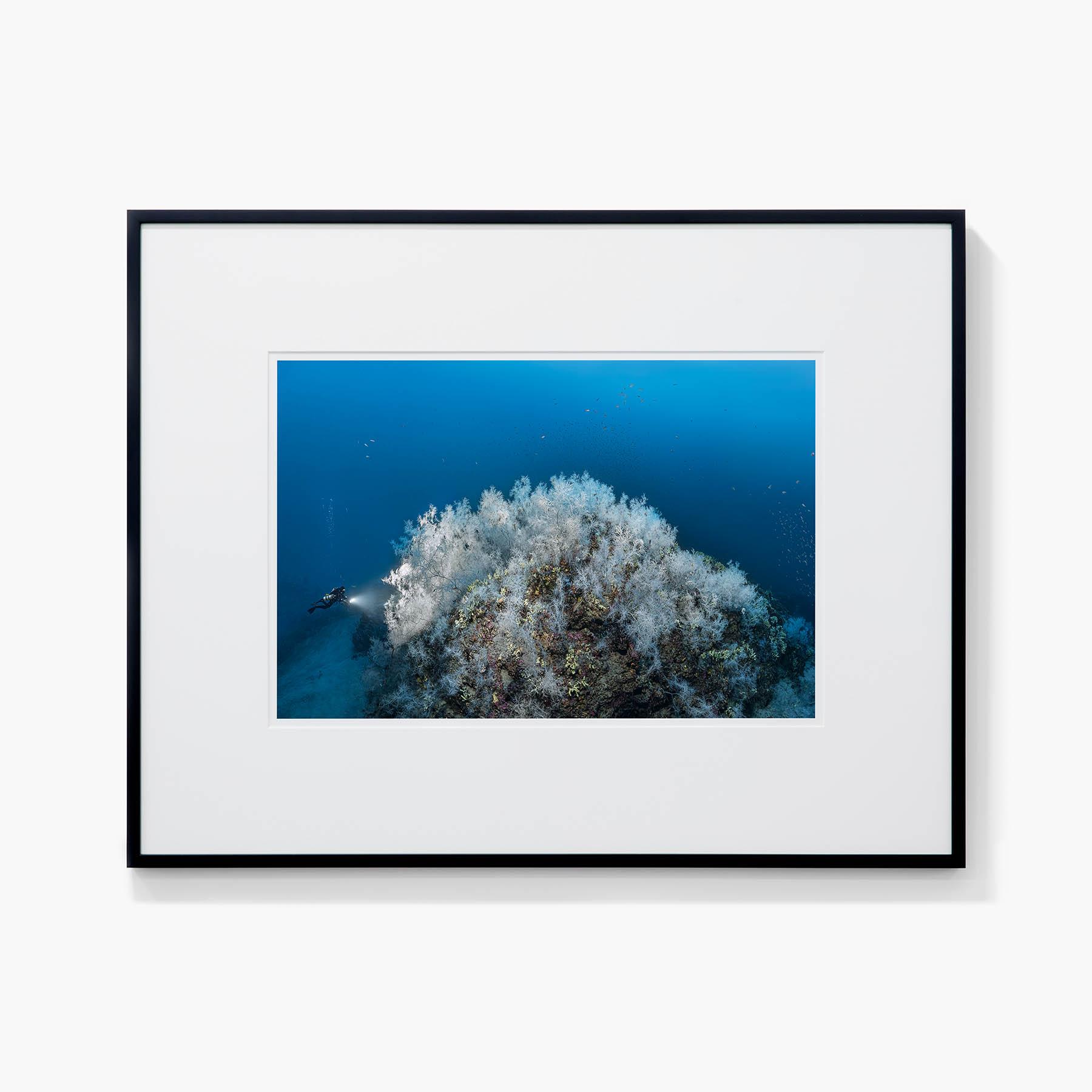 Tirage Laurent Ballesta La fôret de corail noir, Antipathella subpinnata