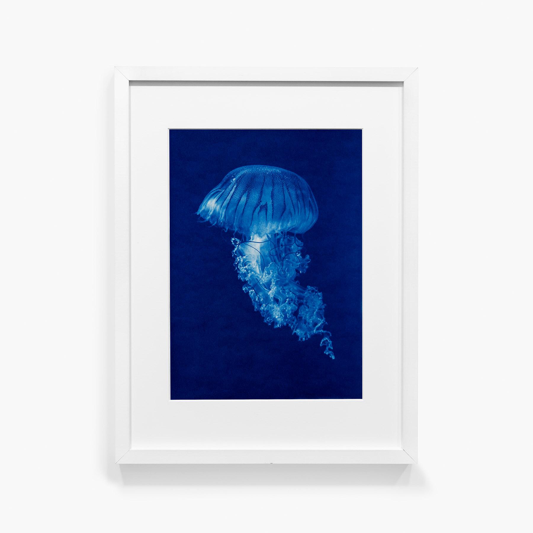 Tirage au cyanotype Méduse 12