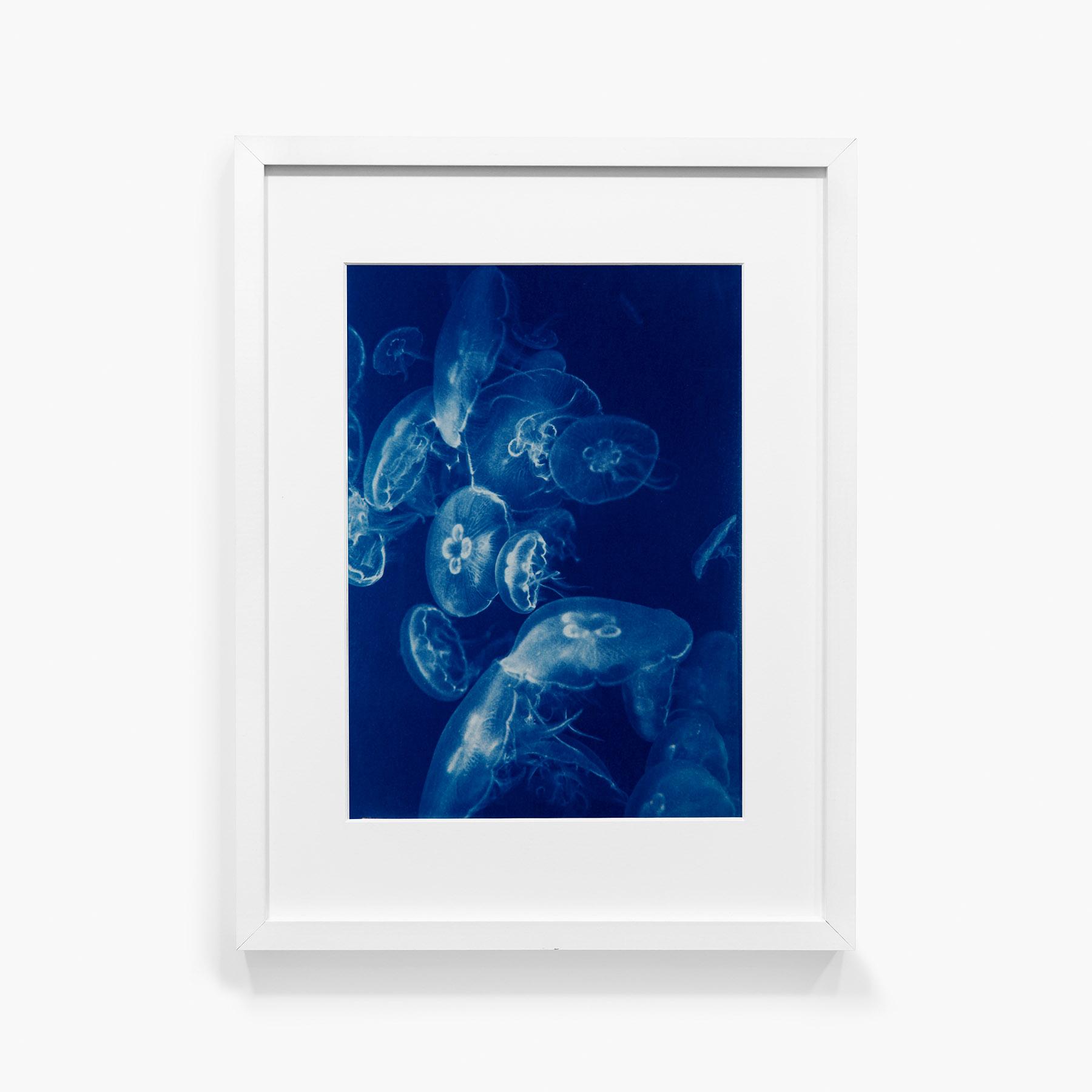 Tirage au cyanotype Méduse 16