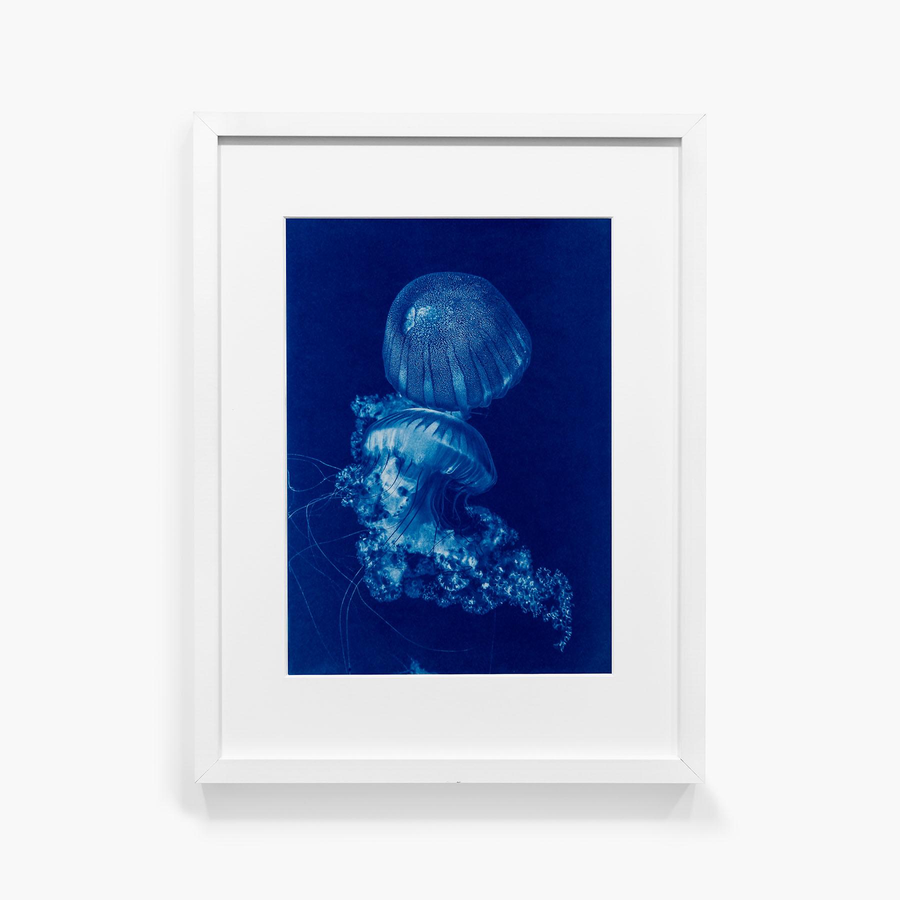 Tirage au cyanotype Méduse 9