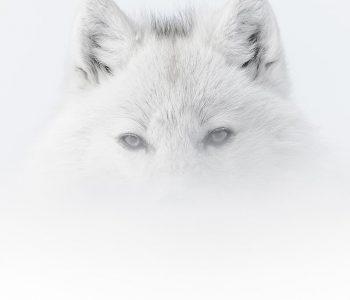 arctic-2