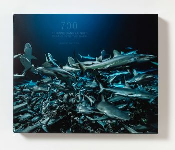700 sharks in the night book cover